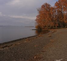 Late Fall by stacyrod