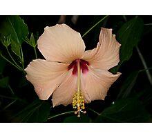 Hibiscus Peach Photographic Print