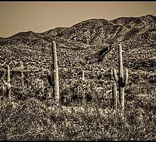 Spur Cross Ranch: Saguaro Wilderness by Roger Passman