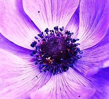 Violet by tmbradley1015