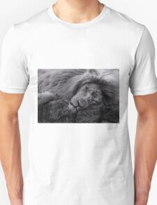 Sleeping Lion at Paradise Wildlife Park T-Shirt