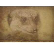 Mr Meercat - Neutral Textured Photographic Print