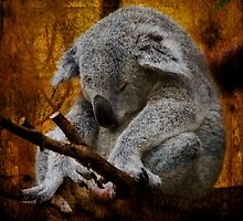 Sleepy Time - Textured Koala Bear by SusieBImages