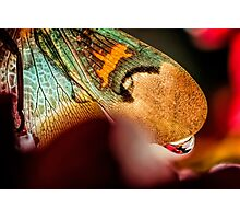 Angel Sighting Photographic Print