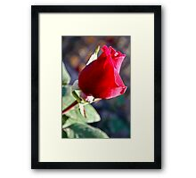 The Romance Framed Print