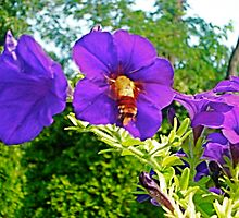 Summer Petunias & Humming Bird Moth 2 by Tara Filliater