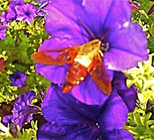Summer Petunias & Humming Bird Moth 4 by Tara Filliater