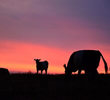 Sunset Cow by GregoryThompson