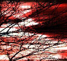 Art Through A Glass Wundow by Johnnie R
