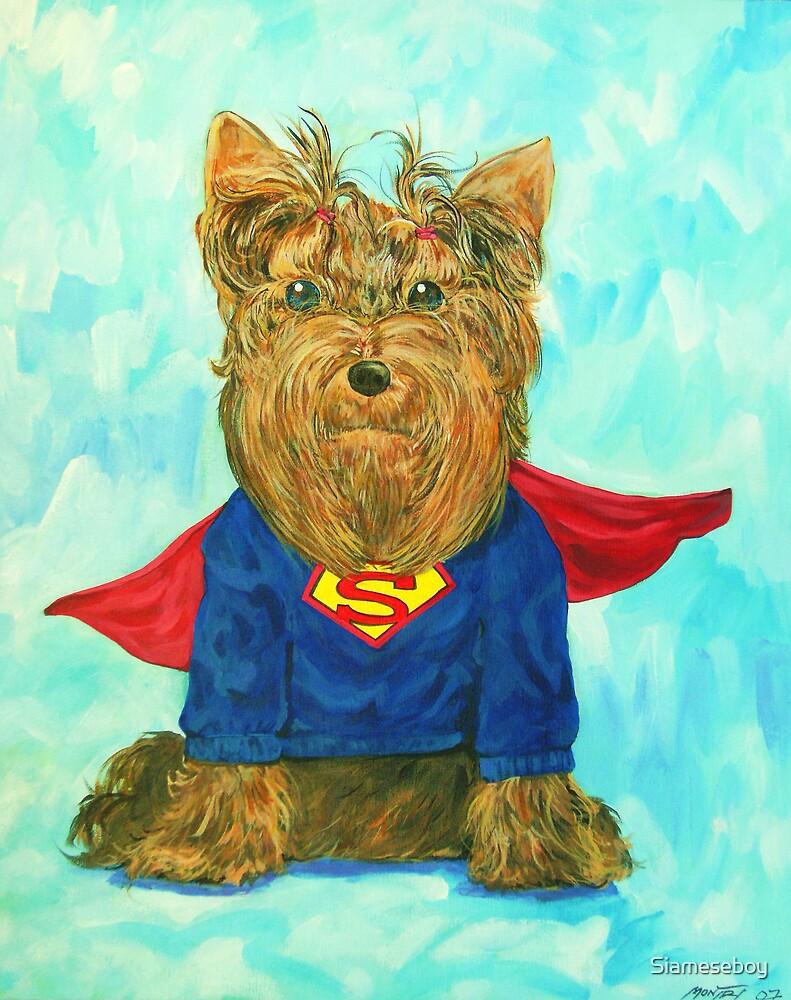 SuperDog by Siameseboy