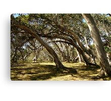 Wind Swept Snowgums,Victorian High Country Canvas Print