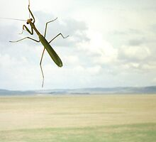 Mantis on Lake George Image by OZImage
