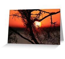 Spanish Moss at Sunset Greeting Card