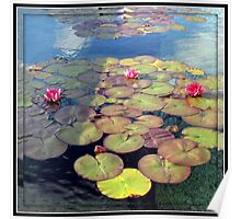 Pink Water Lilies at Sunset in a Mirrored Frame Poster