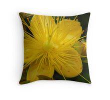 St Johns Wort-Hypericum Throw Pillow