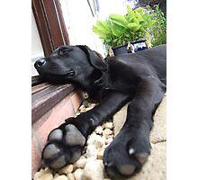 Big Paws Photographic Print