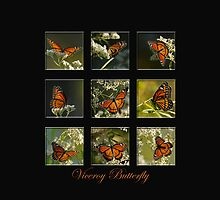 Viceroy Butterfly by Bonnie T.  Barry