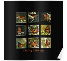 Viceroy Butterfly Poster