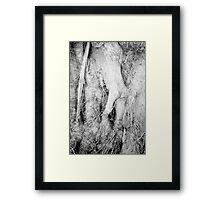 Mandrake Tree Framed Print