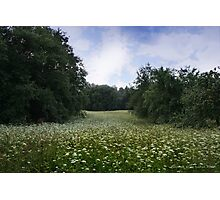 Field of Wild Flowers  Photographic Print
