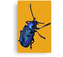 Water Beetle Canvas Print