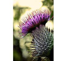 Thistle Do Photographic Print