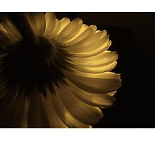 Golden Touch Photographic Print