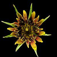 Shining star by Gili Orr