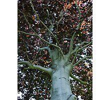 Auburn Branches Photographic Print
