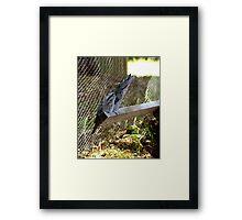 Tawny Frogmouth, anyone? Framed Print