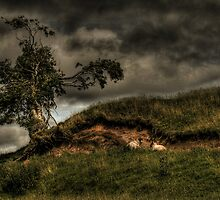 Shelter from the Storm by Paul Cook
