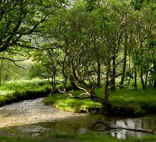 Enchanted Forest by irishfirehound