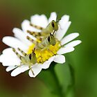 Grasshopper_2 by KarenEaton