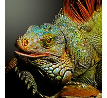 MACHO IGUANA Photographic Print