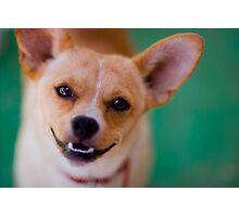 Happy Chihuahua Photographic Print