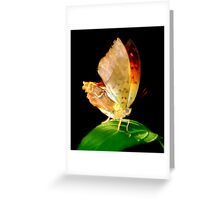 Portrait of a Butterfly... Greeting Card