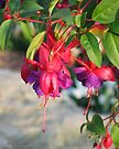 Dangling Fuchsia by Mary Campbell