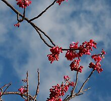Blossom by Mishka Góra