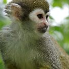 Squirrel Monkey by David O'Riordan