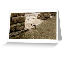 Gulliver-cat in the country of the giants Greeting Card