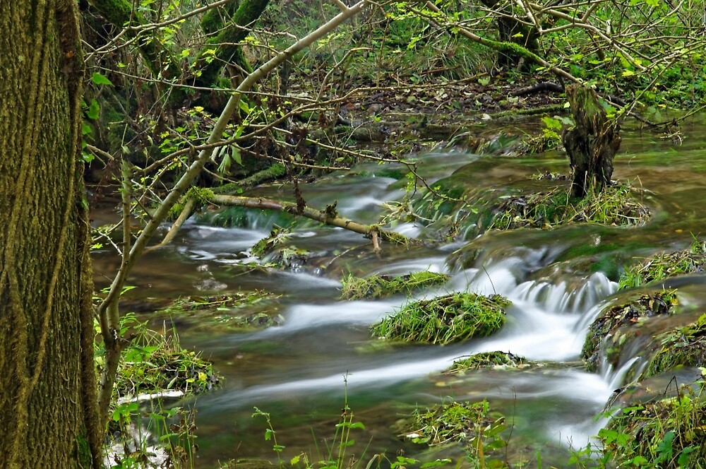 Woodland Stream, Monk's Dale by Rod Johnson