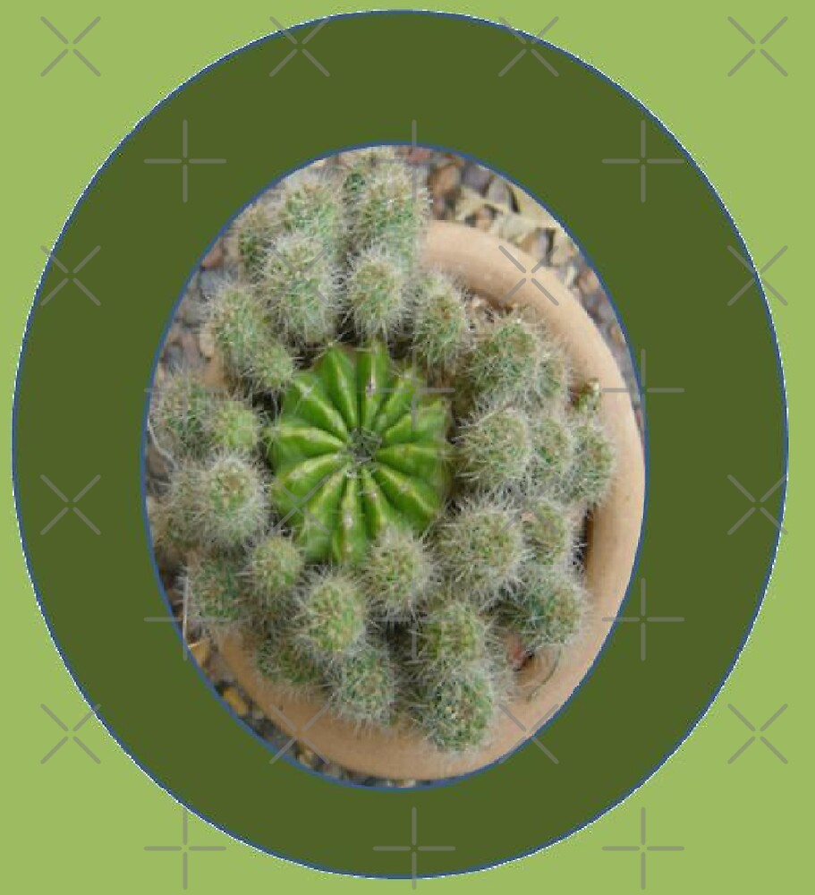 Cacti Round by KazM