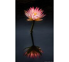 Nymphaea  Jack Wood - Reflection  Photographic Print