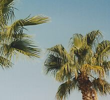 Palm Trees by Debja