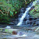 Somersby Falls - Brisbane Water National Park - Gosford NSW by Bev Woodman