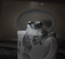 Frog Fondness by Hannah Grace