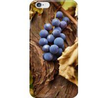 Blue grapes on a vine, closeup iPhone Case/Skin