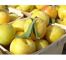 WHITE PLUMS Photographic Print