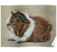 """Lucky"" Gorgeous Guinea Pig Poster"