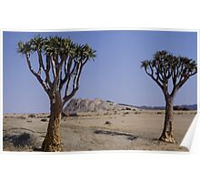 Quiver Trees standing sentinal Poster